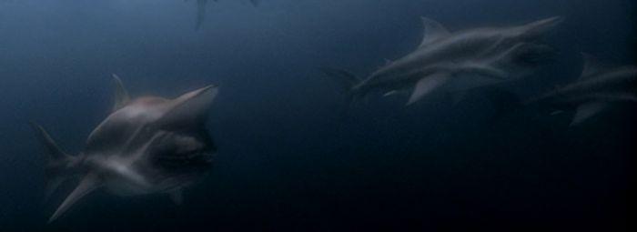 Malibu-Shark-Attack